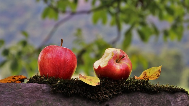 Herbst Apfel photo